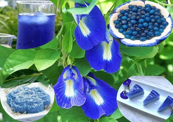 trà hoa đậu biếc 3